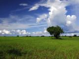 Rice Plantation Photographic Print by Alfredo Maiquez