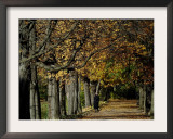 A Man Strolls Through Lazienki Park on a Crisp Autumn Morning in Warsaw, Poland, October 30, 2006 Framed Photographic Print by Czarek Sokolowski