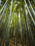 Bamboo Forest, Arashiyama District Photographic Print by Rachel Lewis