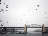 View of Burrard Bridge from Granville Market Photographic Print by Lawrence Worcester