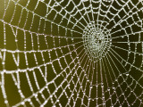 Spider Web Glistening with Dew Droplets Photographic Print by Tim Barker