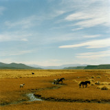 Horses Roaming in a Field, Andes Photographic Print by Christian Aslund