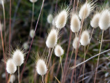 Detail of Natural Grasses Beside Lagoon Beach Photographic Print by Rachel Lewis