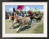 Balinese Riders Race Their Water Buffalos Framed Photographic Print