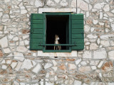 Dog in Window of House in Stari Grad Village Photographic Print by Will Salter