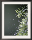 Rain drops Pelt a Branch, Tyler, Texas Framed Photographic Print by Dr. Scott M. Lieberman