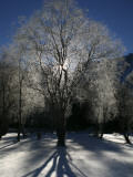 Morning Light Through Frozen Tree Near Shores of Fusine Upper Lake Photographic Print by Ruth Eastham & Max Paoli