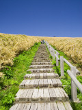 Wooden Walkway Cutting Through Fields of Tall Bamboo Grass Photographic Print by Paul Dymond