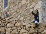 Hen and Donkey, Tizgui, Anti-Atlas Mountains Lámina fotográfica por Aldo Pavan