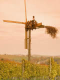Vineyard Windmill Photographic Print by Richard Nebesky
