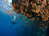 Wreck of Numidia, Big Brother Island Fotografie-Druck von Mark Webster