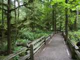 Cathedral Grove in Mcmillan Regional Park Photographie par Orien Harvey