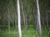 Trees in Forest Fotografie-Druck von Barbara Van Zanten