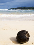 Coconut Washed Up on Beach Photographic Print by Sabrina Dalbesio