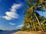 Palm Trees on Palm Cove Beach Photographic Print by Richard l'Anson
