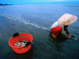 Woman Digs for Crustaceans in Sandy Lagoon on Vietnam's Southern Coast Photographic Print by Stu Smucker