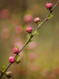 Shayne Hill - Flowers Near Shizunai - Fotografik Baskı