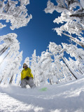 Snowboarder Going Through Trees in Powder Snow at Hoodoo Ski Resort Fotografie-Druck von Tyler Roemer