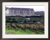 Chardonnay and Pinot Noir Grape Vineyards Framed Photographic Print by Eric Risberg