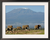Elephants Backdropped by Mt. Kilimanjaro, Amboseli, Kenya Framed Photographic Print by Karel Prinsloo