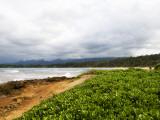Coastal Flora Photographic Print by Sabrina Dalbesio