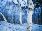 White Trees and Snow at Mount Moiwa Lookout Photographic Print by Shayne Hill