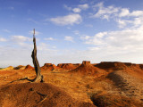 Old Tree Stump in Desert Photographic Print by Alfredo Maiquez