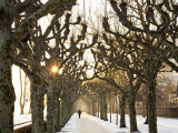 Man on Path in Park in Winter Photographic Print by Richard l'Anson
