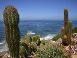 Cacti in Gardens of Fellowship of Self Realization with Pacific Ocean Beyond Photographic Print by Ruth Eastham & Max Paoli