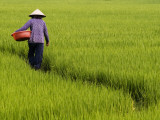 Rice Field Worker Photographic Print by Viviane Ponti