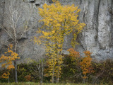 Autumn Colour and Cliff Along Route 276 Photographic Print by Shayne Hill
