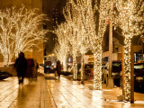 Trees Decorated with Lights at Night Photographic Print by Richard l&#39;Anson