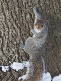 Squirrel on Tree Trunk in Central Park Photographic Print by Richard l'Anson