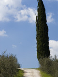 Country Road in Chianti Region Photographic Print by Rocco Fasano