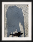 Mahout Walks along the Shadow of the Elephant, Patna, India Framed Photographic Print by Prashant Ravi