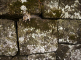 Squirrel on Rock Wall, Mount Hakodate Photographic Print by Shayne Hill