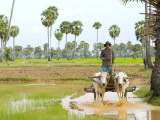 Farmer in Rice Fields North of Phnom Penh Photographic Print by Austin Bush