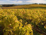 Autumn in the Tamar Valley Vineyards Photographic Print by Andrew Bain