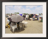 Somaliland Women with Their Goats Protect Themselves from Hot Sun with Umbrellas Framed Photographic Print by Sayyid Azim