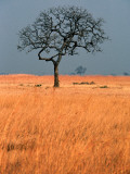 Lone Tree in Grassland Photographic Print by Mark Daffey