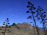 Stems of Agave Plants with Talayon De La Cogolla Mountain Beyond Photographic Print by Ruth Eastham & Max Paoli