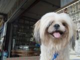 Pet Dog Fotografiskt tryck av Brent Winebrenner