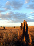 Termite Mounds on the Nifold Plain Photographic Print by Andrew Bain