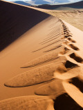 Footprints on Ridge of Sand Dune Photographic Print by Todd Lawson