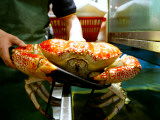 Large Crab at Chinese Restaurant, Chinatown Photographic Print by Oliver Strewe