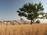 Wheat Field with Uchisar Village in Background Photographic Print by Tim Hughes