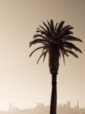 Palm Tree and Skyline Photographic Print by Thomas Winz