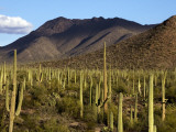 West Unit of Saguaro National Park Photographic Print by Mark Newman