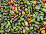 Detail of Chillies for Sale at Street Market Photographic Print by Brent Winebrenner
