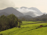 Tea Plantations Fringing Montane Rainforest Photographic Print by Ariadne Van Zandbergen